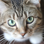 Feeding Your Cat The Best Cat Food