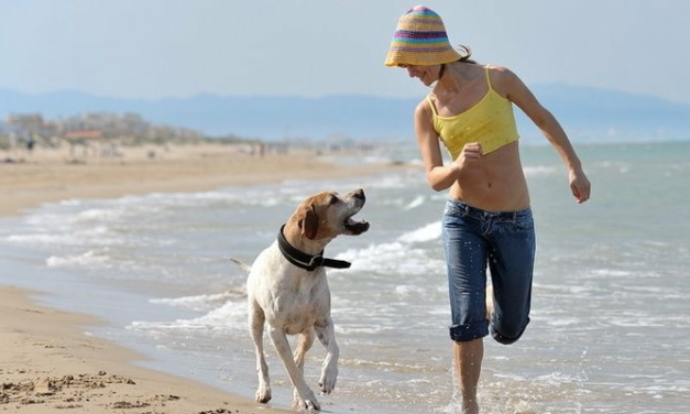 Why Rescued Animals Can Be The Best Pets